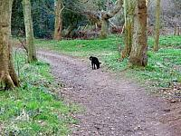 Sniffing in Raincliff woods